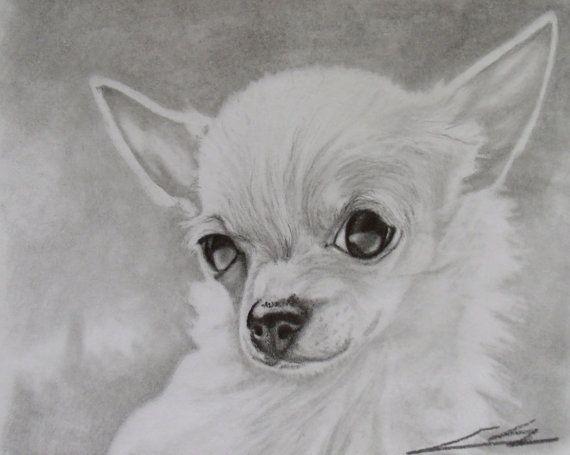 Dibujo De Chihuahua: Chihuahua Black And White Graphite Drawing Print On Etsy