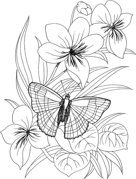 Flower Coloring Pages for Adults | Butterfly coloring page, Flower ...