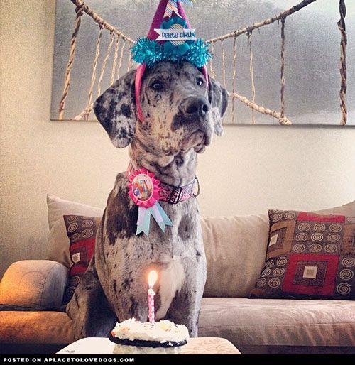 Birthday Great Dane Great Dane Great Dane Dogs I Love Dogs