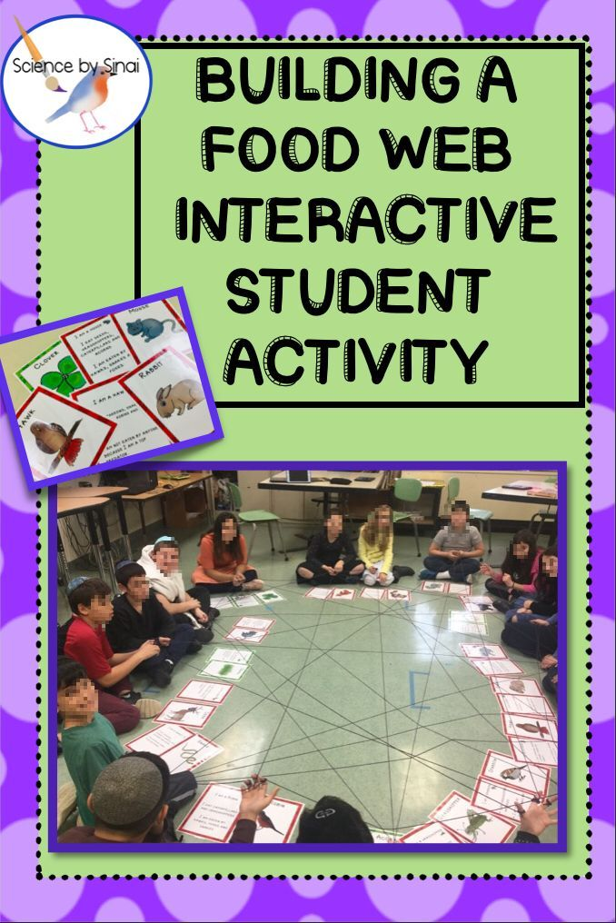 Build an Interactive STUDENT FOOD WEB! Food chain Activity ...