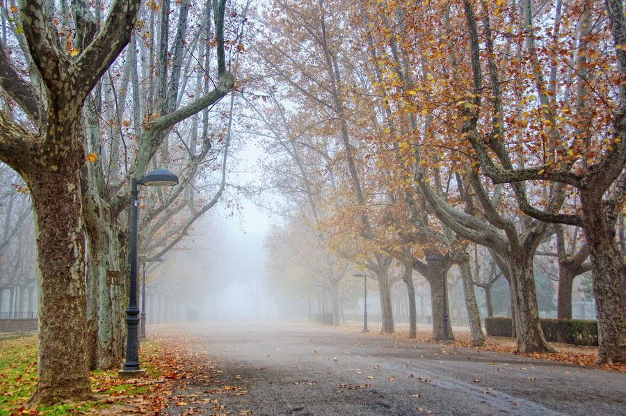 Park under fog. by Rolde  on 500px