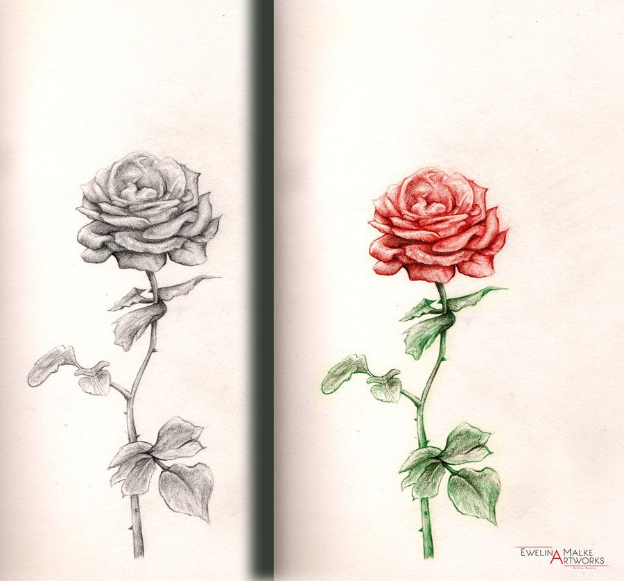 Rose Tattoos With Words Google Search: Rose Drawing - Google Search
