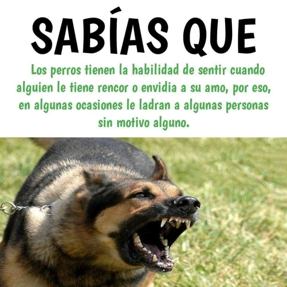 Sabias Que Datos Curiosos De Animales Perros Frases Animales Frases