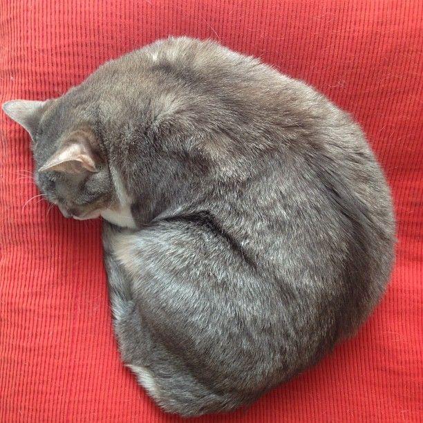 un gatto di bordone