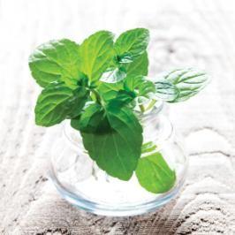 Herbs for Headaches:    Dab peppermint essential oil at the temples to help ease a headache.