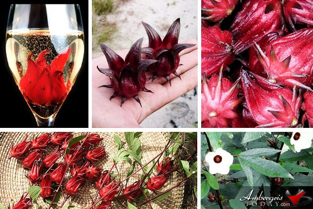 Wild Hibiscus Flowers In Syrup Food Flower Food Recipes