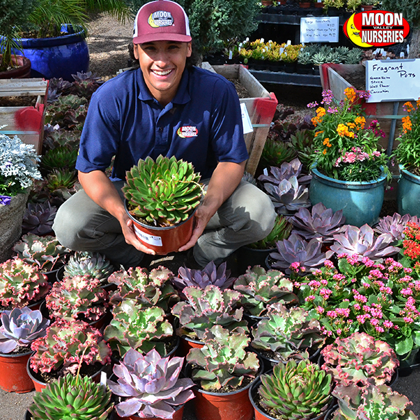 Moon Valley Nurseries Has The Best Succulents In Phoenix California And Las Vegas