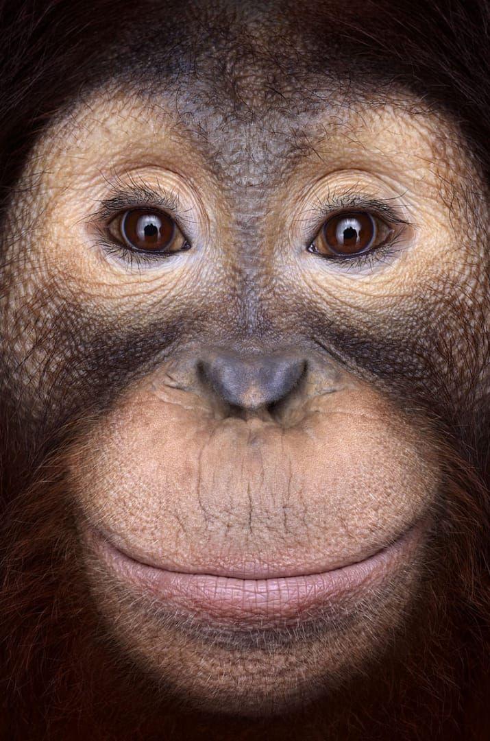 Incredible Studio Portraits Of Wild Animals By Brad Wilson: 40 Breathtaking Portraits Capture The True Beauty Of