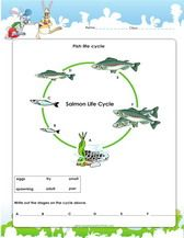 Fish Life Cycle Worksheet For 3rd Grade Cycle For Kids Fish