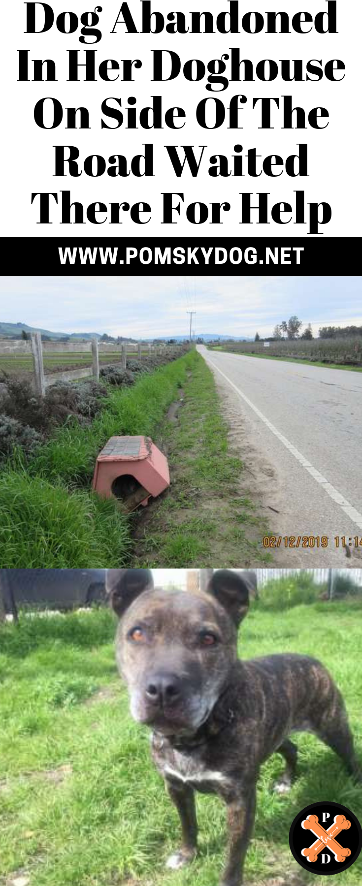 Dog Abandoned In Her Doghouse On Side Of The Road Waited There For Help Dogs Dog Houses Animal Stories