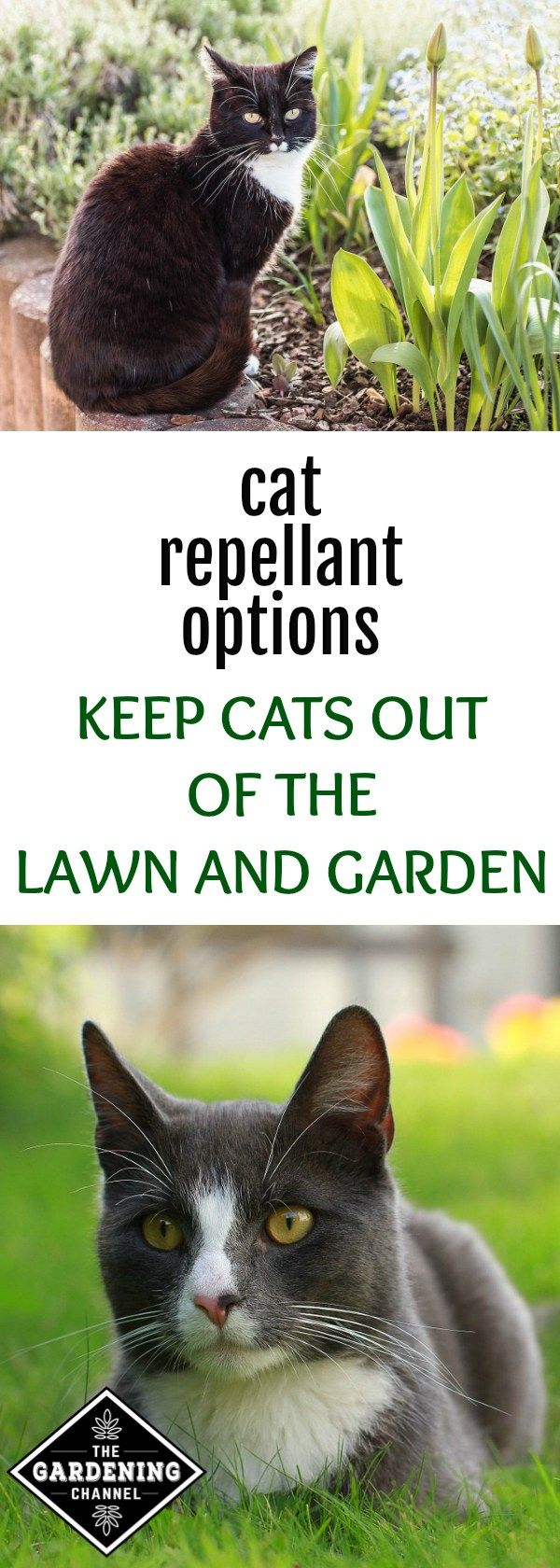 how to keep cats from chewing on plants