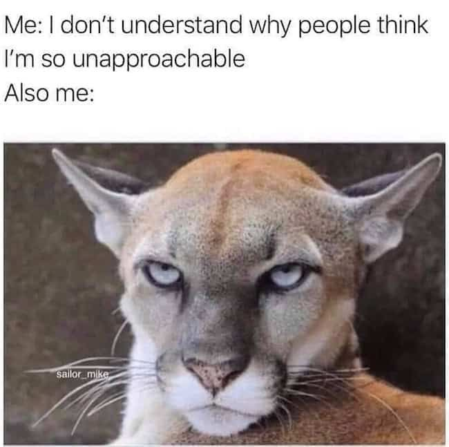 32 Painfully Accurate Animal Memes For Introverts