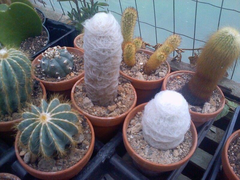 Cactus Ortment Malones Nursery Charlotte Nc