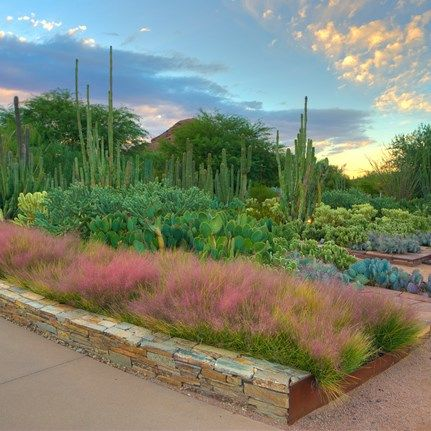 Garden Travel Destinations: Desert Botanical Garden.  Discover beautiful gardens to visit, browse worldwide trips and cruises, and find local garden tours, day trips and more