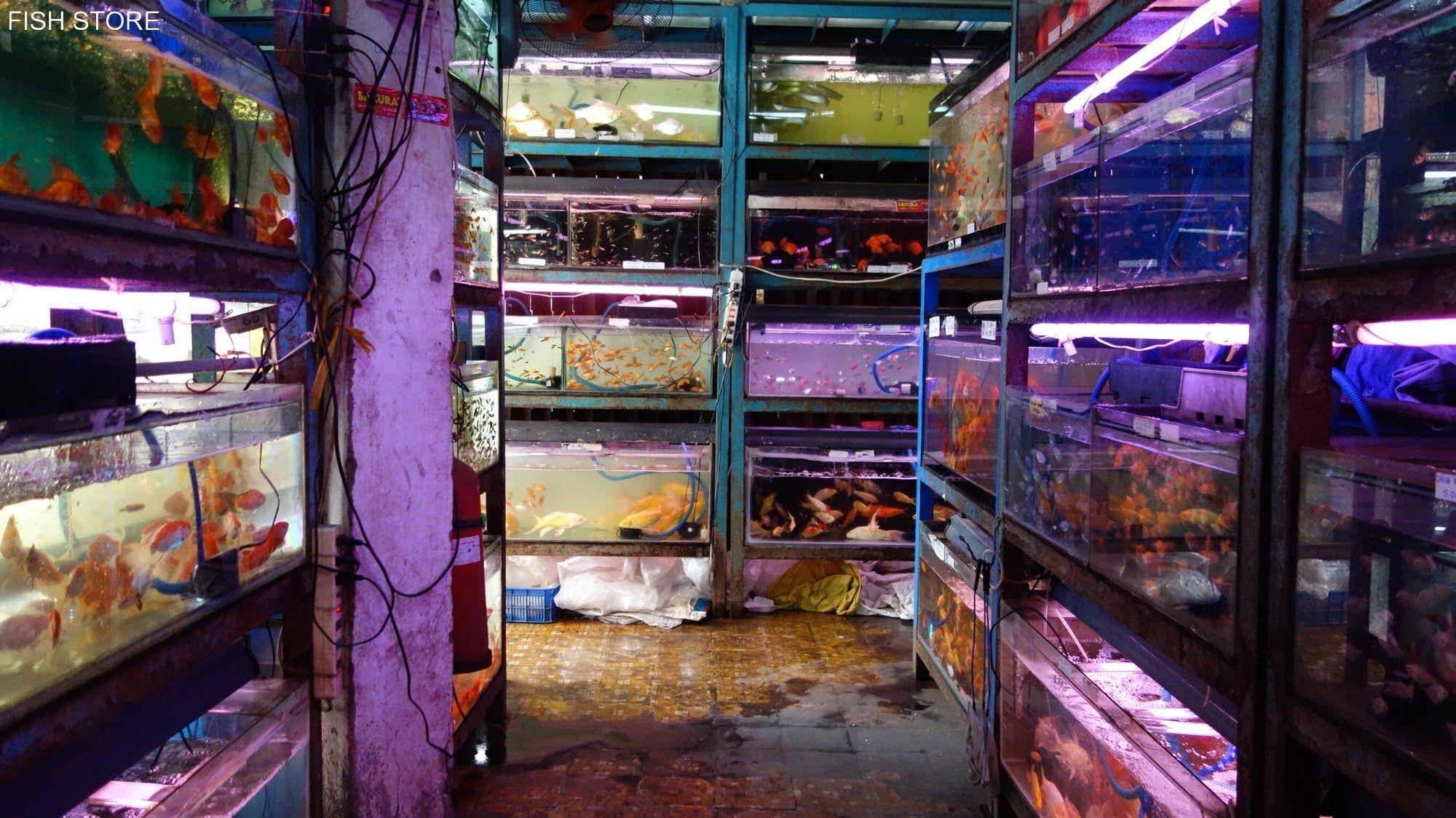 Fish Store Aquarium Shop In Asia 2014 Vietnam Aquarium Shop Japan Country Aquarium Fish
