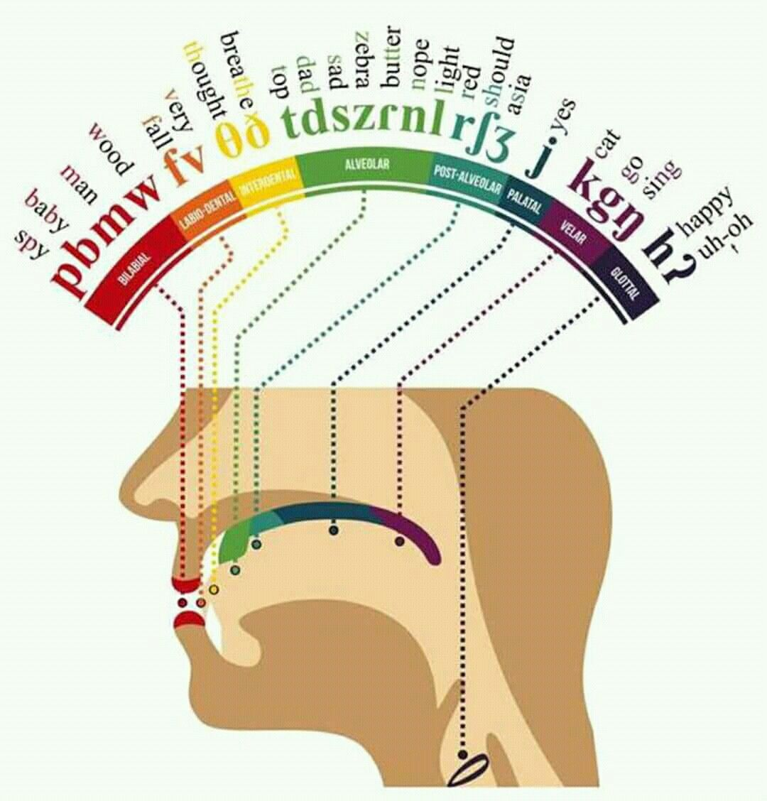 Language Sounds And Place In The Mouth They Come From