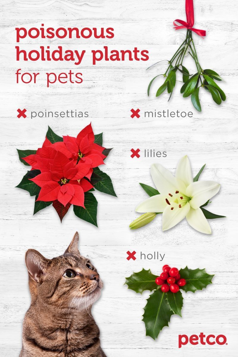 Pin By Nadine Maley On Cats Cat Safe Plants Toxic Plants For Cats Cat Coloring Page