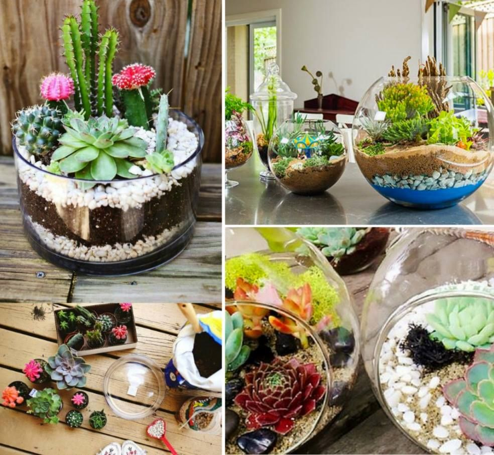 How To Make Terrarium In A Jar Video Fairy Garden Pots Dish