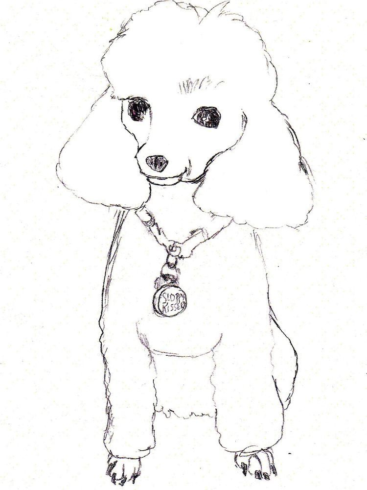 Poodle Coloring Pages Pdf Print Poodle Drawing Puppy Coloring