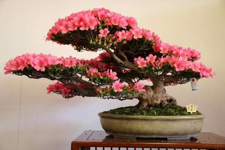 Pin By Mainelifeaudit On Bonsai Bonsai Art Bonsai Tree Bonsai Plants