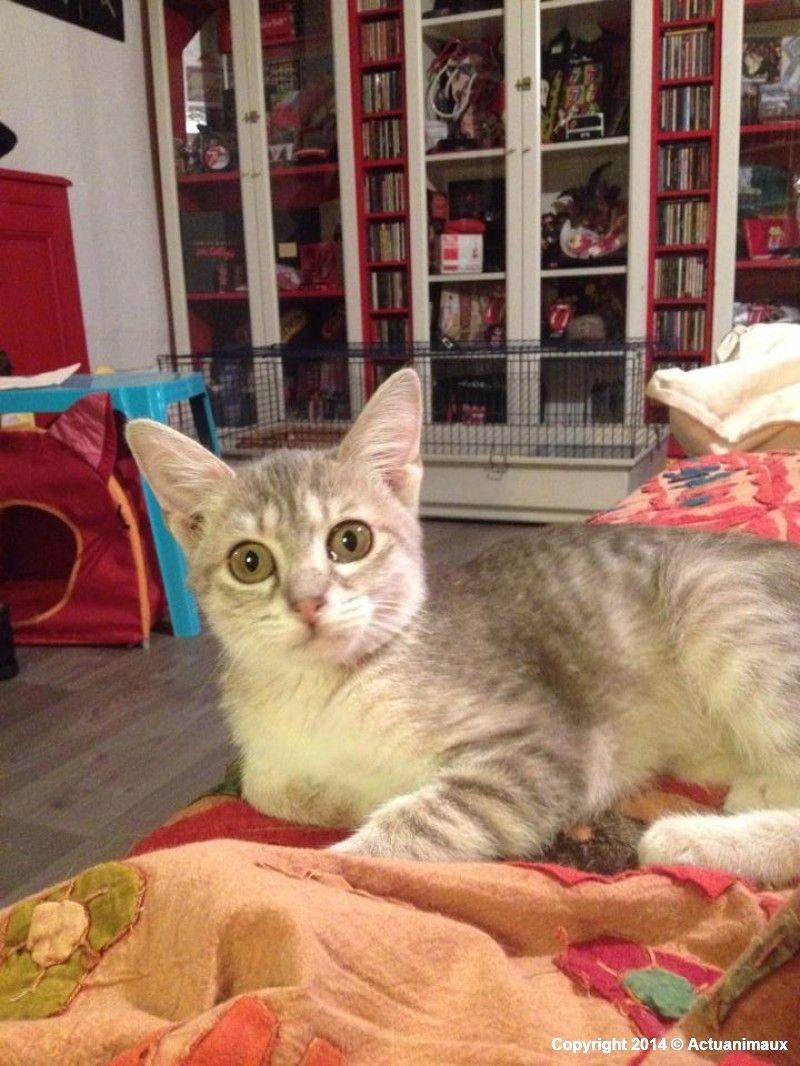 Actu Animaux Pimkie Victime D Un Accident Stupide Animals Cats Cat Love