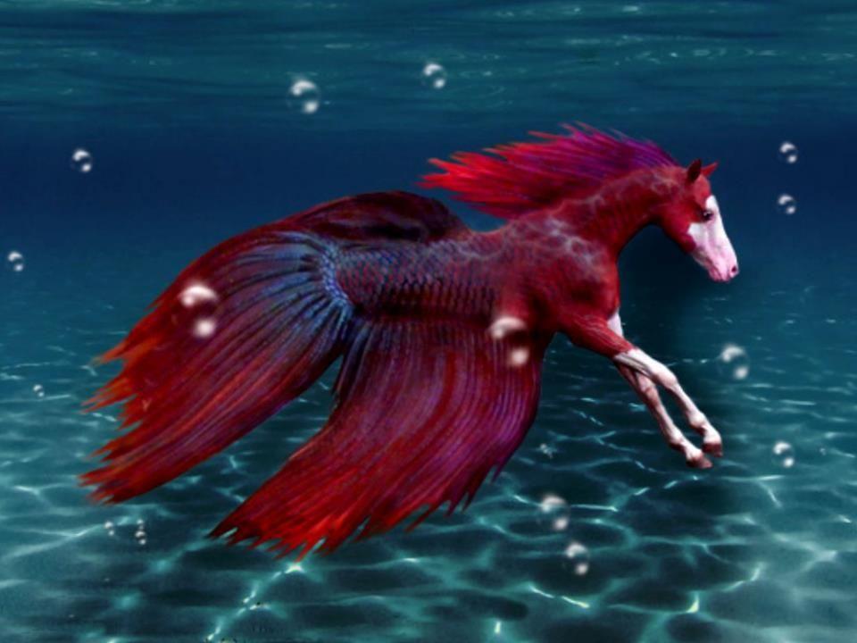 Подводный конь картинки