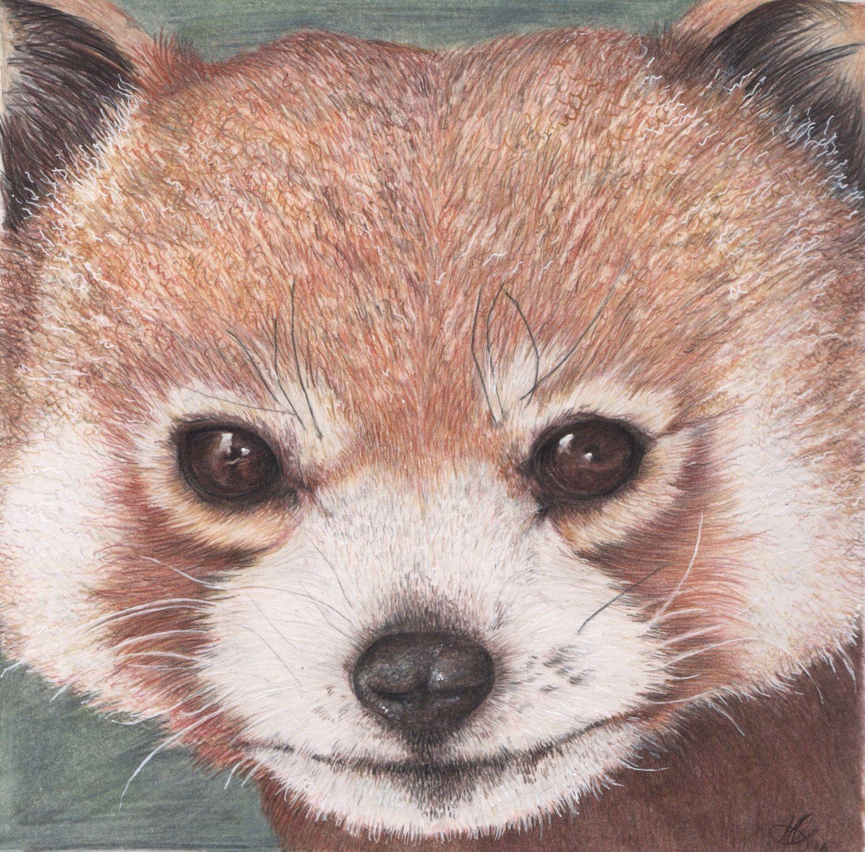 Cute Red Panda, original Illustration nursery decor