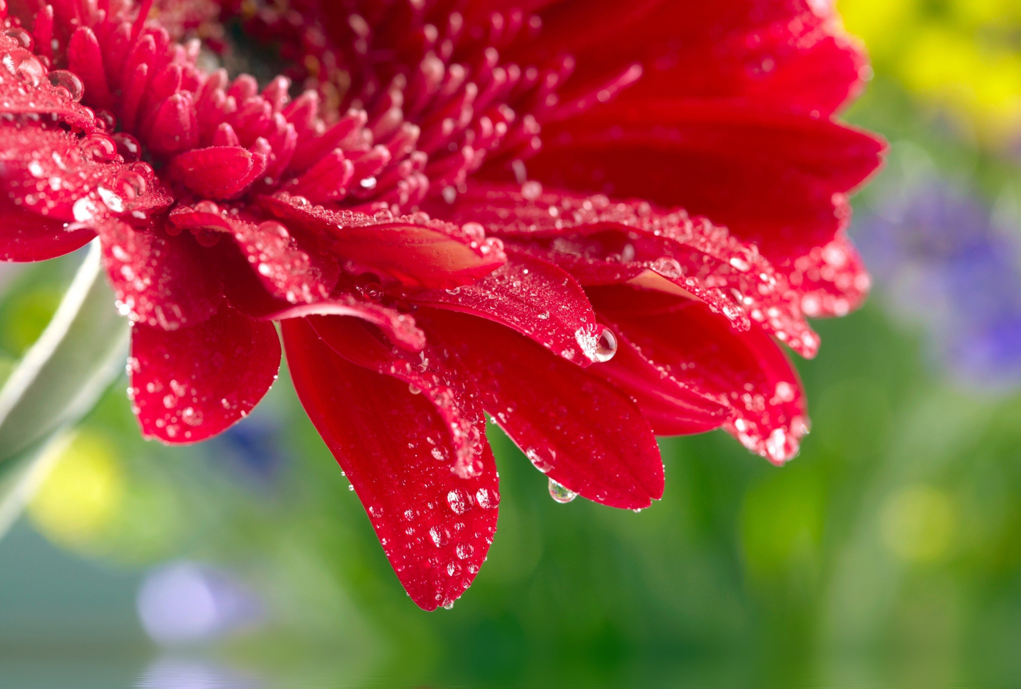 flower water drop wallpapers wallpaperhd.wiki | backgrounds & hd