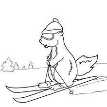 marmotte à ski | Marmotte dessin, Dessins faciles