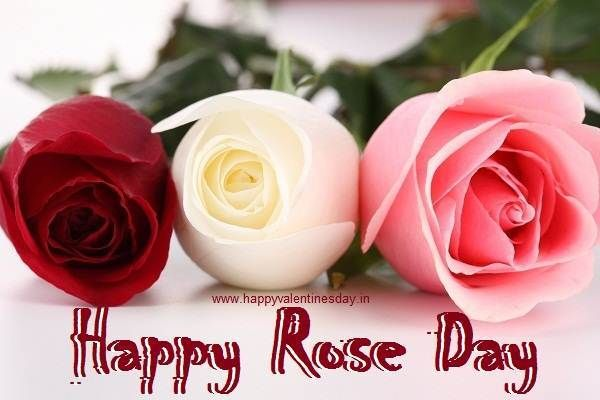 Send Happy Rose Day 2013 Images in Facebook Chat   Roses & Flowers ...