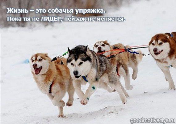 Афоризмы про жизнь в картинках | Собаки, Милые собаки ...