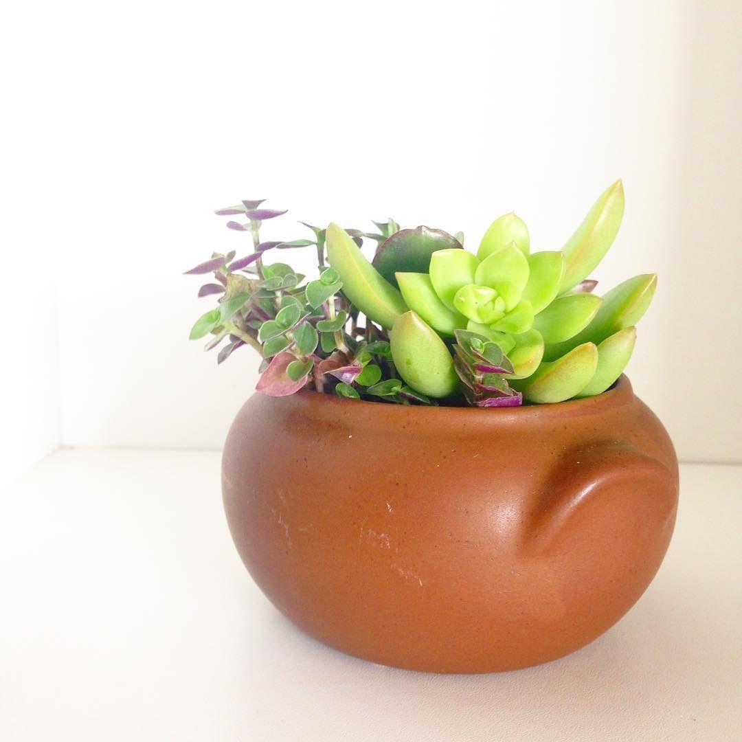 Charmosas suculentas na cerâmica. Quer uma? #oitominhocas #plantinhas #succulent #suculovers #decoração #decoracaocriativa