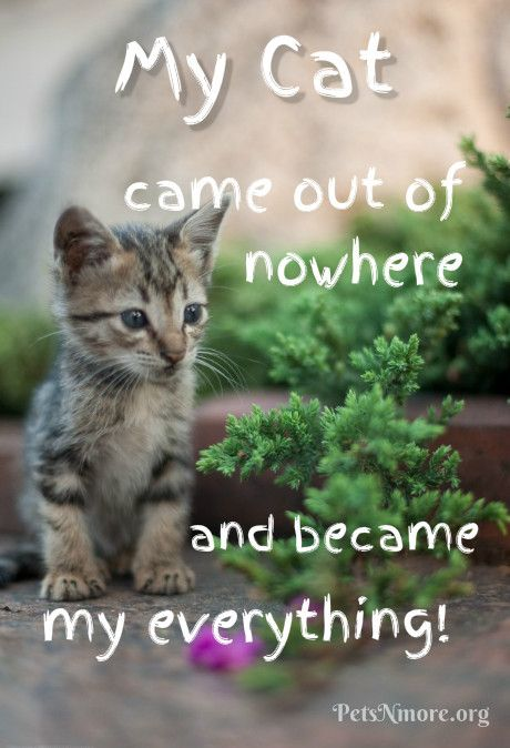 Pets N More Top Cat Quotes Baby Cats Kittens Cutest Kitten Pictures