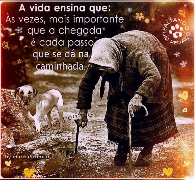 Bomdia Frases Reflexão Pensamentos Pet Vida Fé Esperança