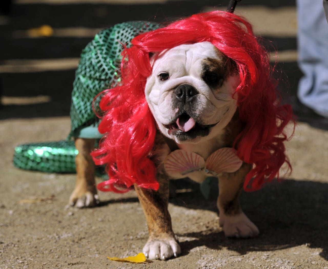 29 Pet Halloween Costumes So Cute You'll Cry | Halloween costumes ...