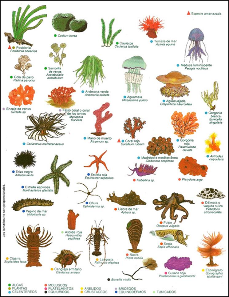 Resultado De Imagen Para Lamina De Los Invertebrados Ambos Lados Plant And Animal Cells Animals Floral
