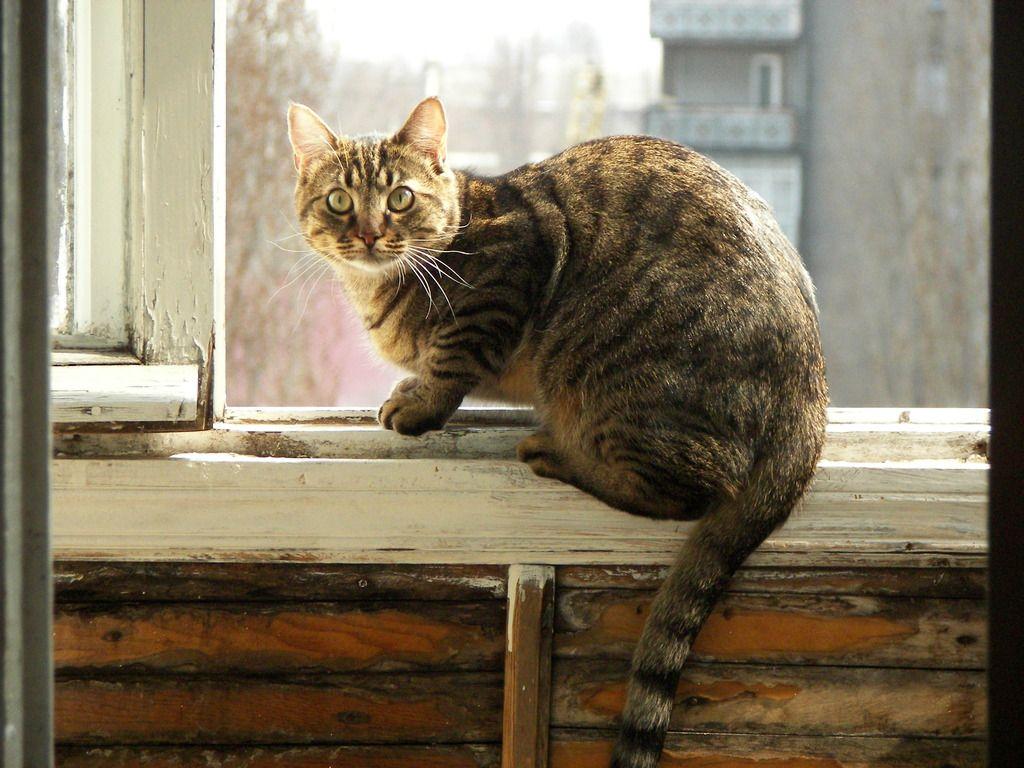 Risultati Immagini Per Chat Et Fenetre With Images Cats
