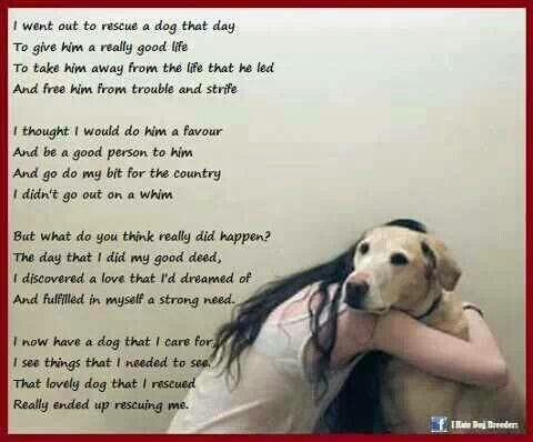 Things To Know When Rescuing A Dog From A Shelter