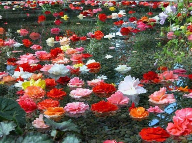 preciosas flores en el campo - Fotos De Flores Preciosas