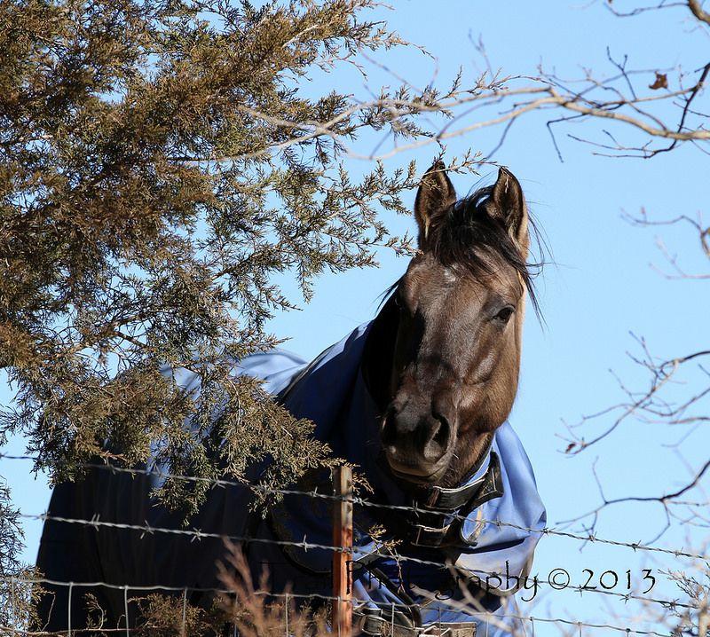 Beautiful buckskin | Horses, Horse photos, Beautiful horses