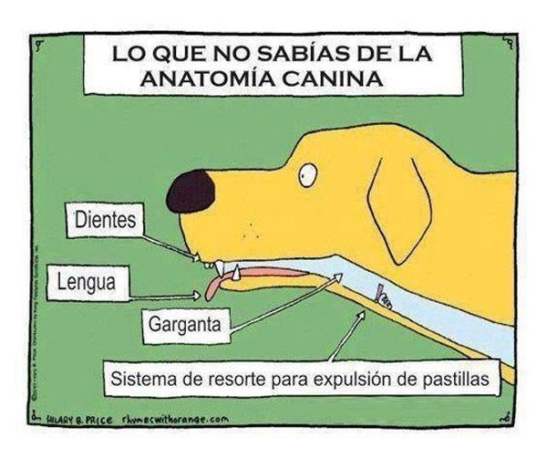 Lo que no sabías de la anatomía canina | Humor e imágenes divertidas ...