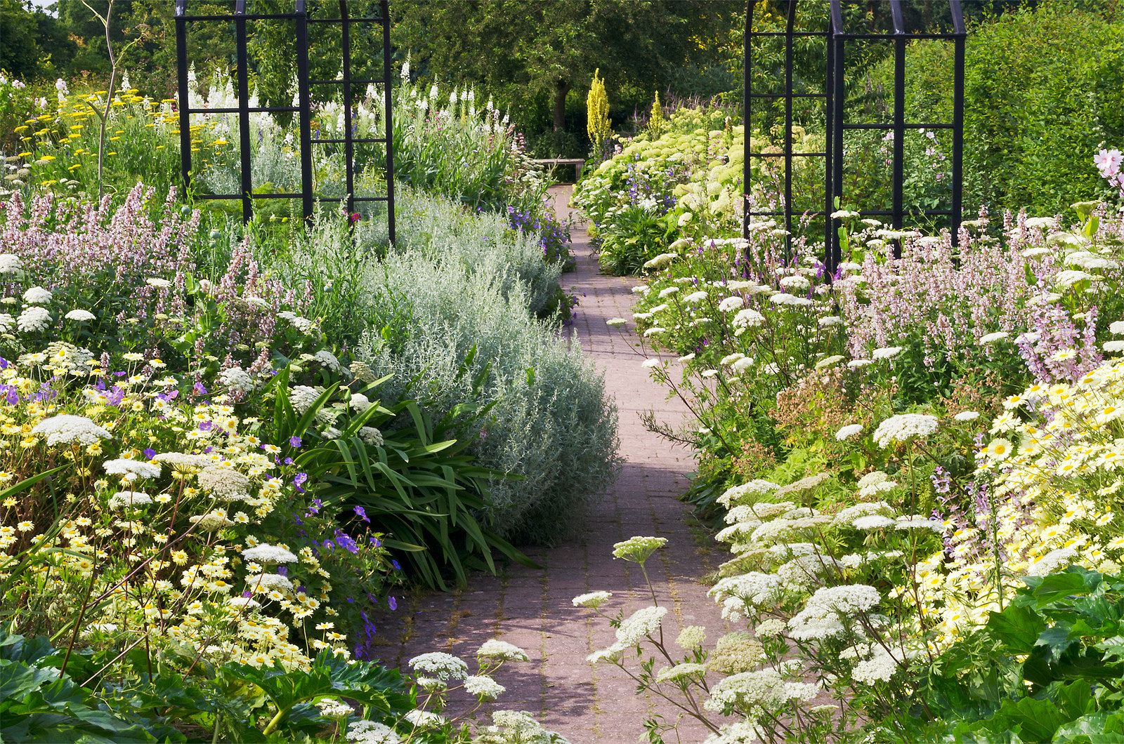 English Herbaceous Borders Rhs Wisley Gardens Uk 4 Of 50 Architectural Plants Herbaceous Border Garden History