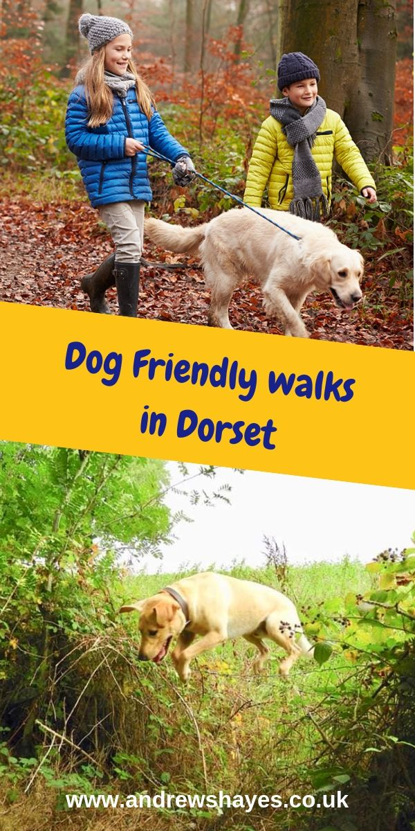 Perfect Beautiful Relaxing East Devon Dog Pet Friendly
