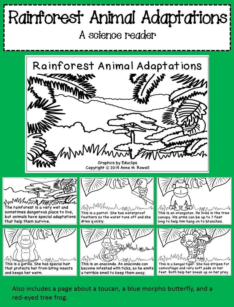 Rainforest Animal Adaptations Science Reader Rainforest