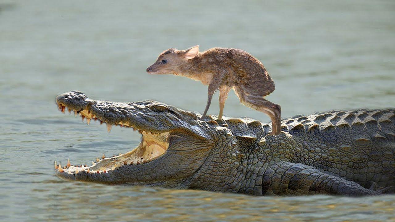 10 Unbelievable Animals That Saved Other Animals Animals Amazing
