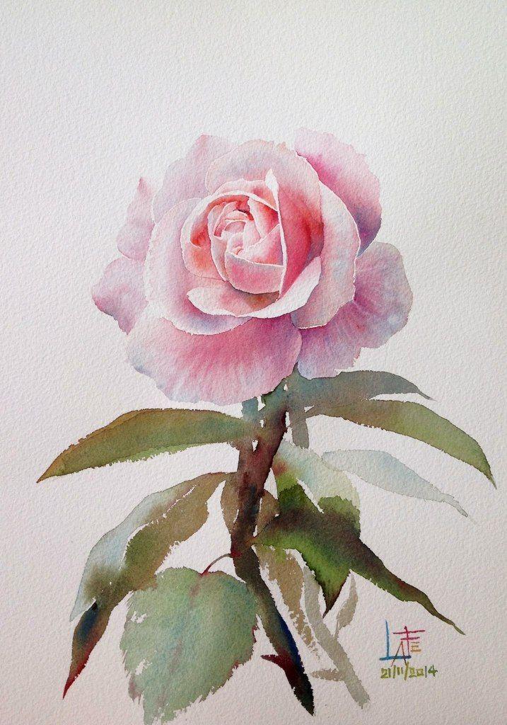 Фотографии Рисуем розы акварелью c художником ЛаФе   2 альбома