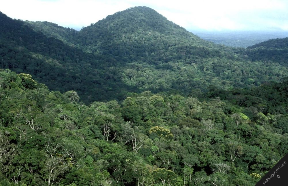 Landscape of French Guiana.