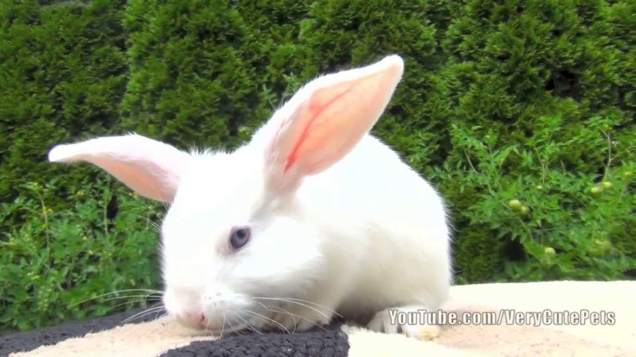 White Baby Bunnies For Desktop Background 13 HD Wallpapers