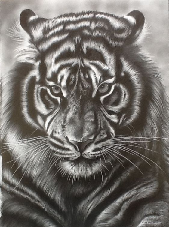 Tiger face pencil drawing