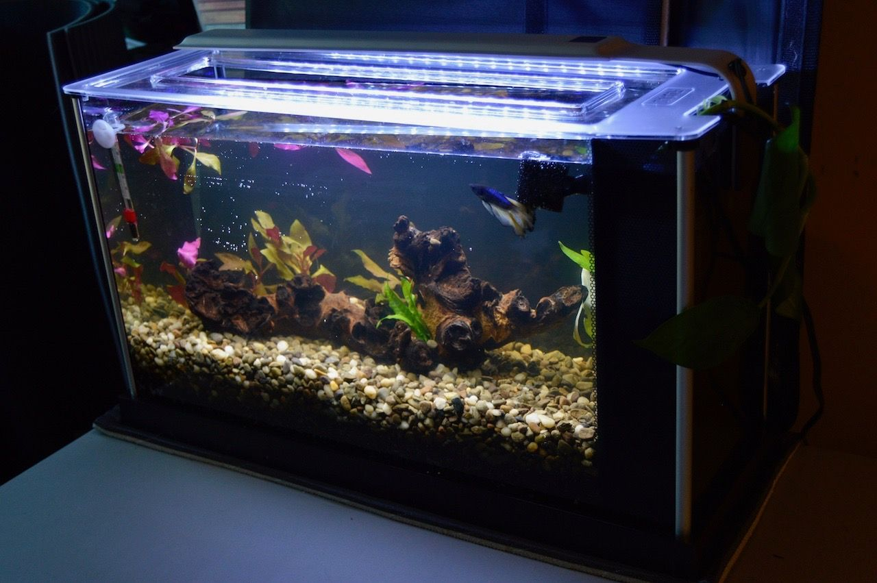 Fluval spec V home for one Mustard Gas Betta by the name